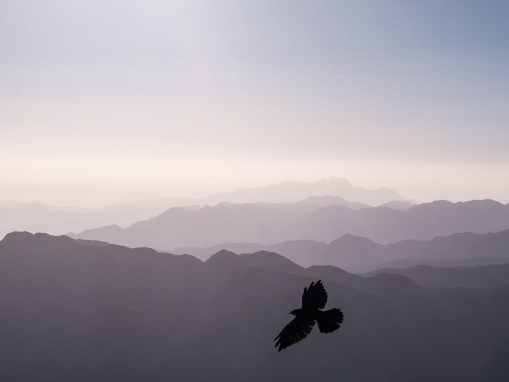 Bird soaring against a mountain landscape symbolizing freedom from a growth mindset